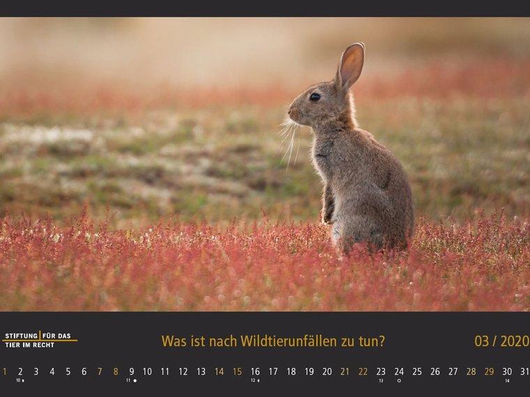 Hase, TIR Tierschutzkalender 2020
