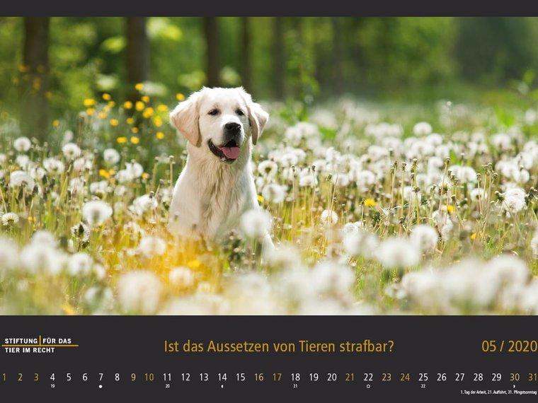 Kalenderbild Mai 2020 Hund in der Wiese