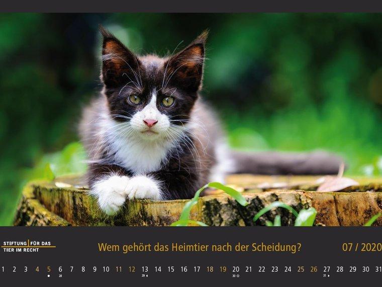 Tierschutzrechtskalender 2020, Juli, Katze