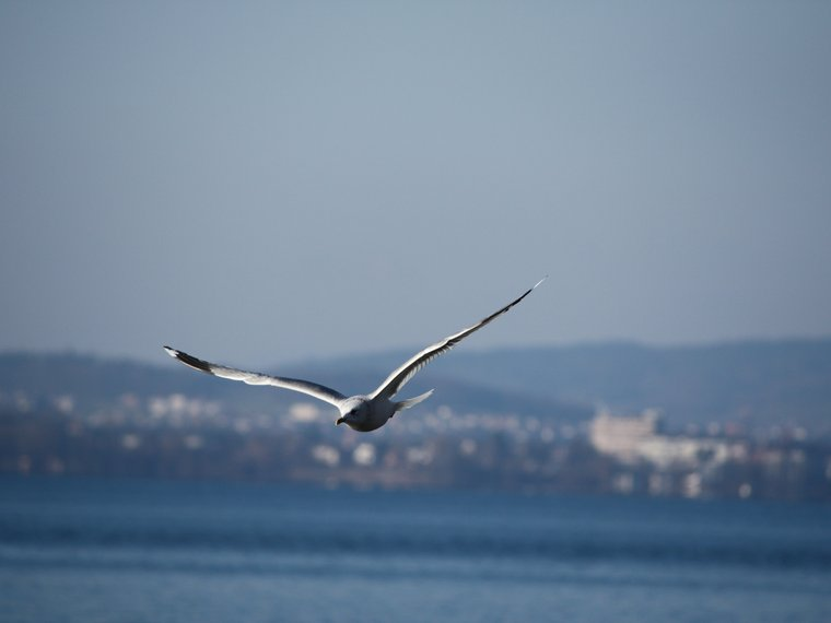 Wasservögel VG