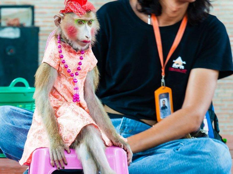 Affe verkleidet und geschminkt