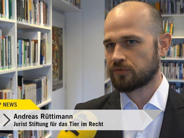 Tele Top News vom 29.3.2019: Andreas Rüttmiann zur Beschlagnahmung von Katzen in Müllheim