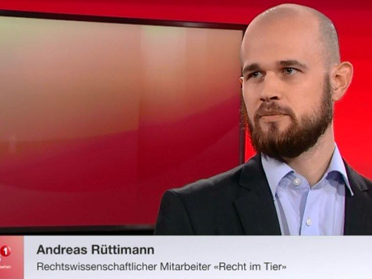 Youtube Tele 1 fokus vom 24.11.2016 mit Andreas Rüttimann zum Thema Auswertung der Schweizer Tierschutzstrafpraxis 2015