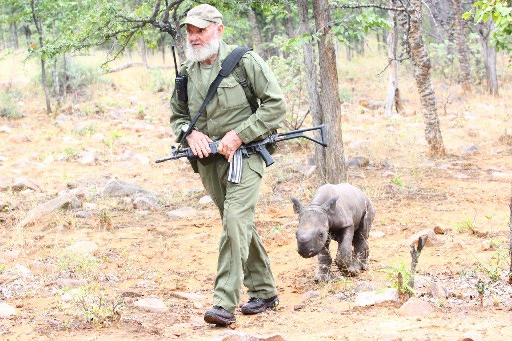 Auch vor Mutterkühen machen Wilderer nicht halt. Pete Clemence mit verwaistem Baby-Nashorn im Savé Valley Conservancy