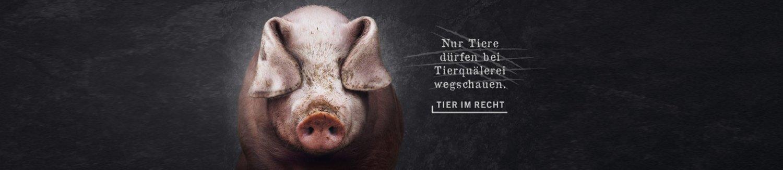 Banner-Schwein.jpg