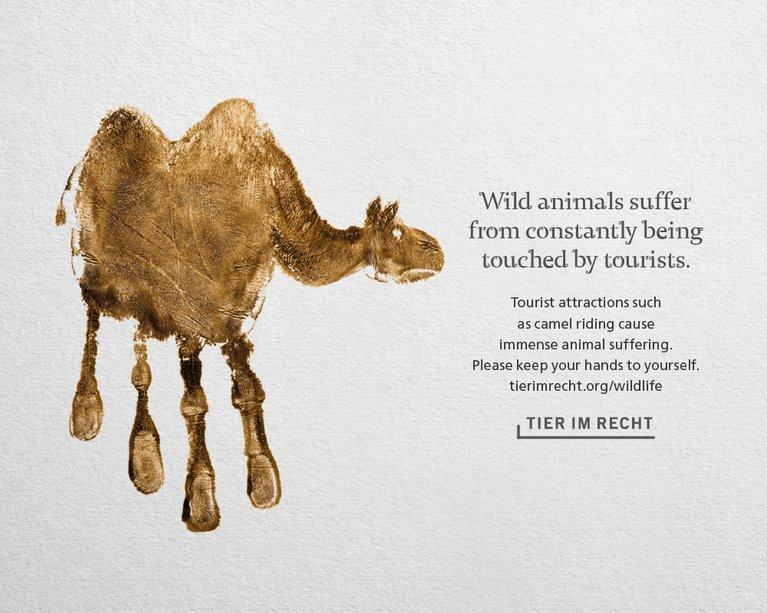 Wildlife Kampagne Querformat Baer Bear EN