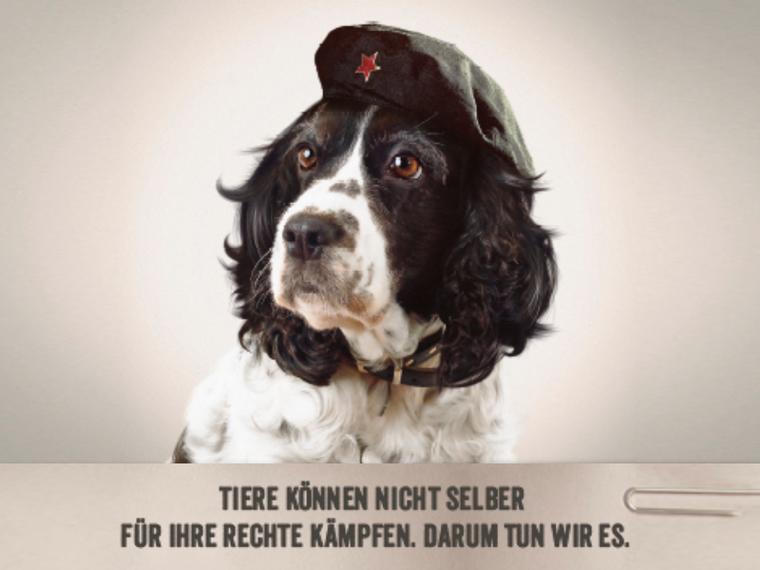 Che Hund Ruf Lanz breit mit Slogan
