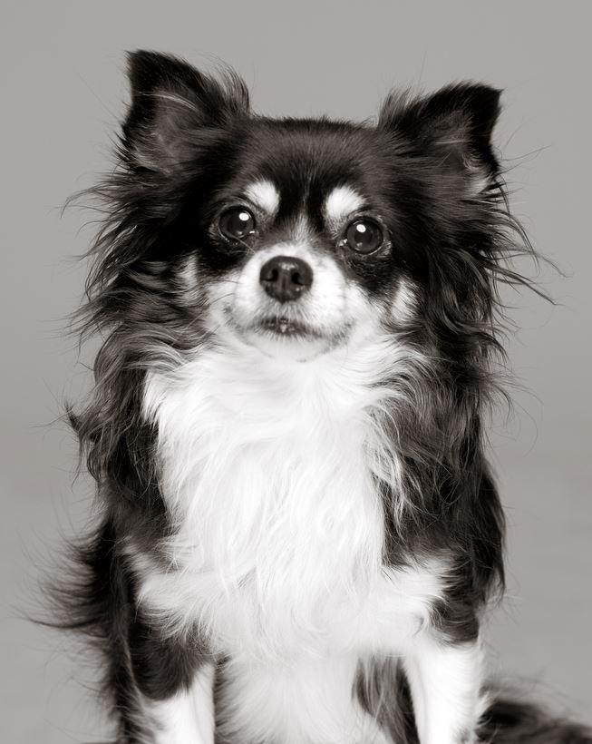 Coco Portrait