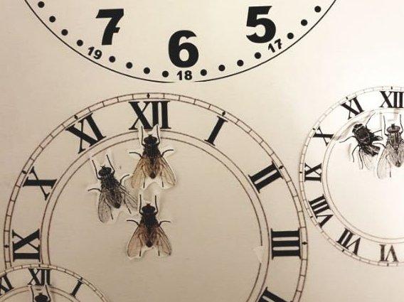 Die Zeit für Insekten läuft ab