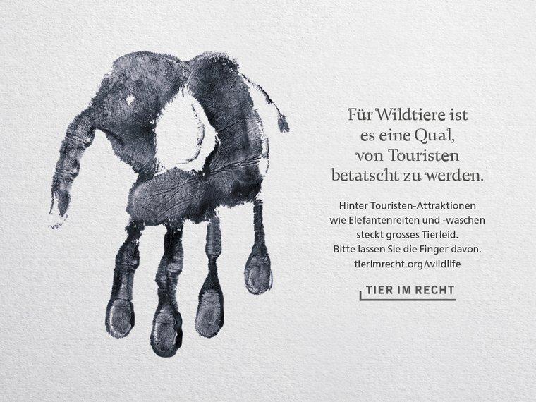 Wildlife Kampagne Querformat Elefant DE