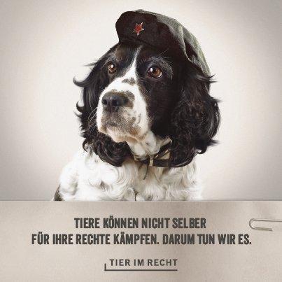 Che Hund Ruf Lanz