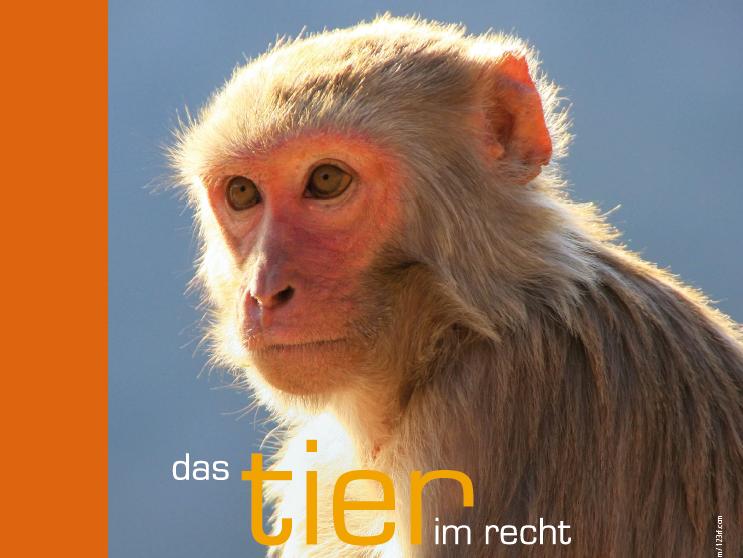 TIR Flyer 39 Ausschnitt News