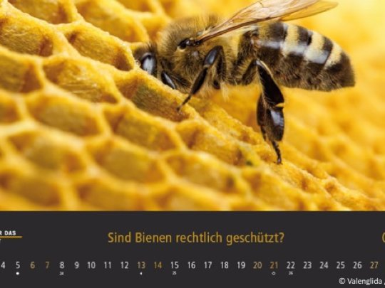 Tierschutzkalender 2020, Juni, Biene