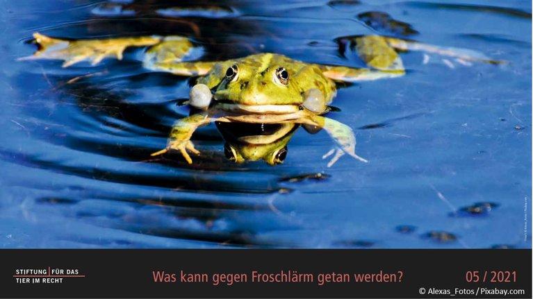 Frosch, Kalender Bild Mai 2021 inkl. Copyright