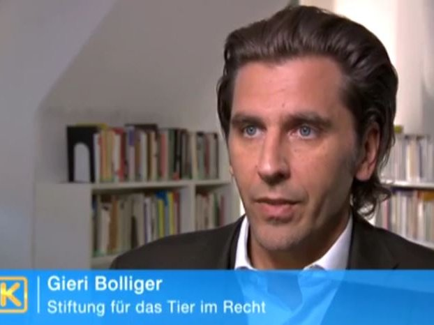 Youtube Kassensturz SF1 vom 10.4.2012 mit Gieri Bolliger zum Thema rechtliche Aspekte bei der Zucht kranker Hunde