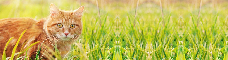 Header Katze im Gras - Wer ist die TIR