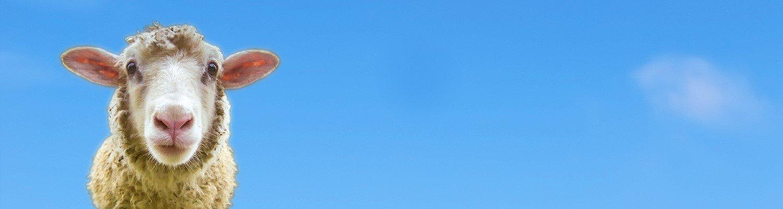 Header-Schaf-blau.jpg