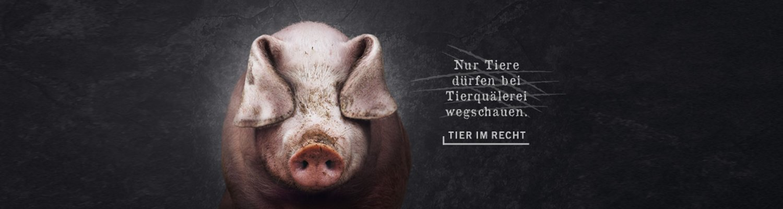 Header Schwein - Nur Tiere dürfen bei Tierquälerei Wegschauen