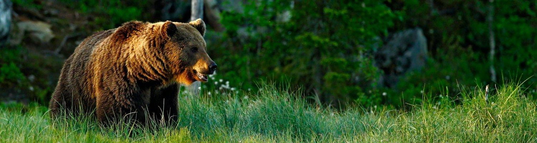 Header Bär See