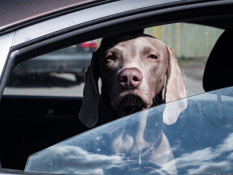 Hund-im-Auto-2019.jpg