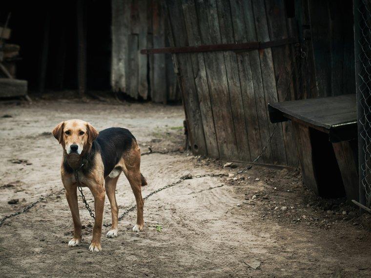 Hund an Kette
