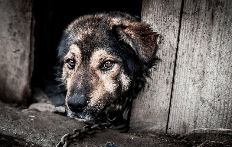 Auswertung der Schweizer Tierschutzstrafpraxis 2015 cover bild