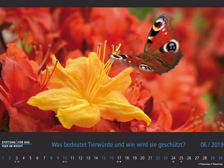 Kalender 2019 Bild Juni