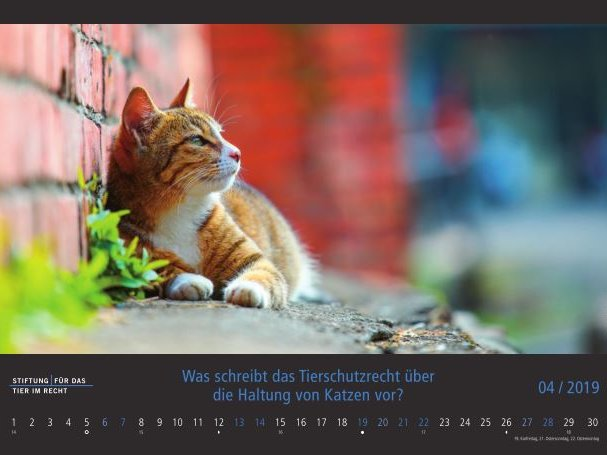 Kalender-2019-April-Katze.JPG