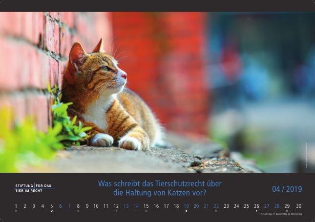 Kalender-2019-April-Katze.JPG