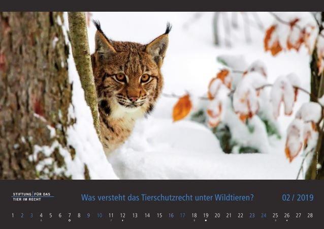 TIR Kalender 2019 Februar