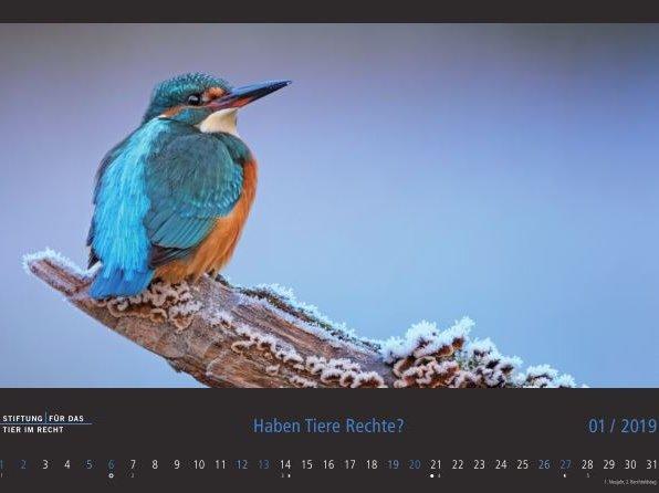 Eisvogel Kalender Januar 2019