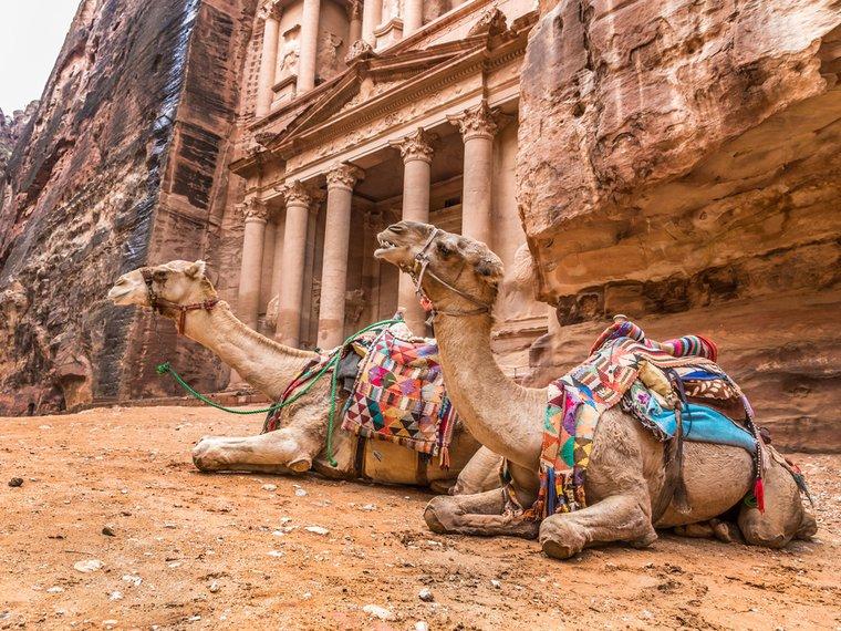Kamele geschmückt Kamelreiten