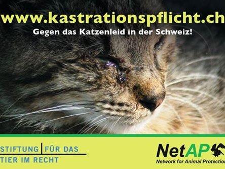 Kastrationspflicht Freigänger-Katzen Kampagne