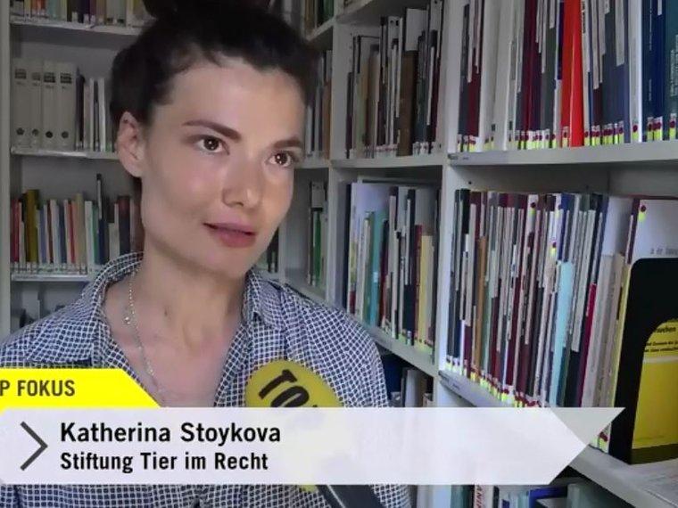 Youtube Top Fokus Tele Top vom 2.8.17 mit Katerina Stoykova zum Thema merkwürdige Tierschutzgesetze in der Schweiz