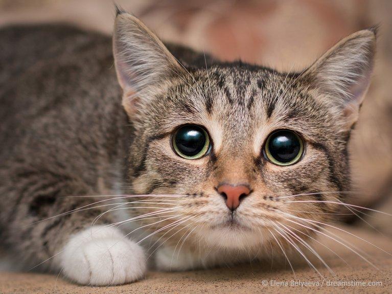Ängstliche Katze Nationalfeiertag
