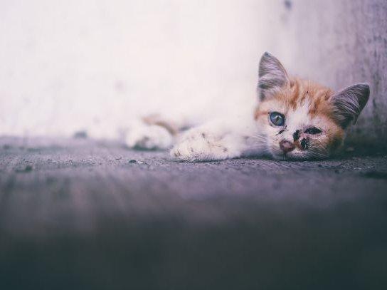 Katze liegt verletzt am Boden, Tierschutzstraffallpraxis 2018