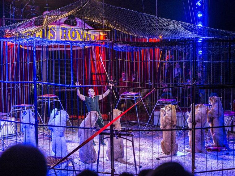 Löwennummer_Circus-Royal.jpg