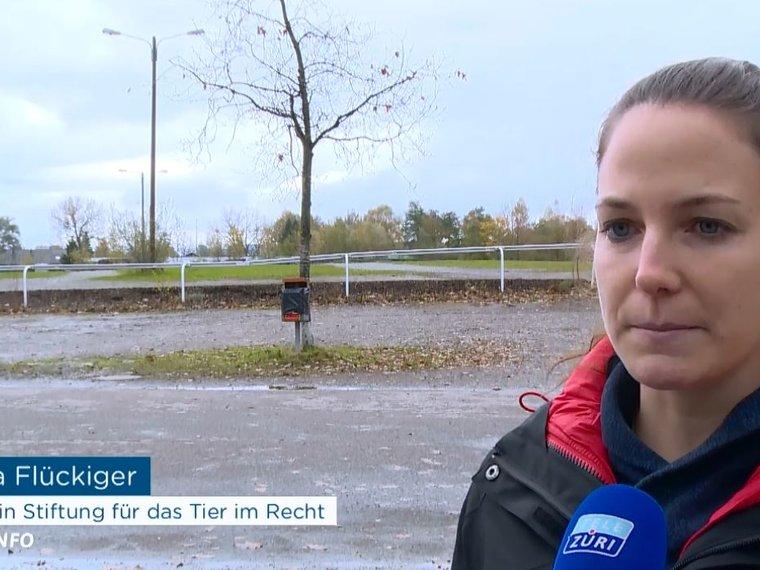 Nora Flückiger in Tele Züri Info vom 24.10.2017 über Cesar Millan