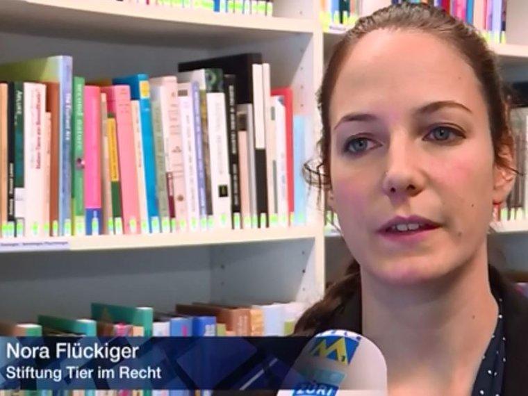 Youtube Tele M1 Aktuell vom 24.11.2016 mit Nora Flückiger zum Thema Auswertung der Schweizer Tierschutzstrafpraxis 2015