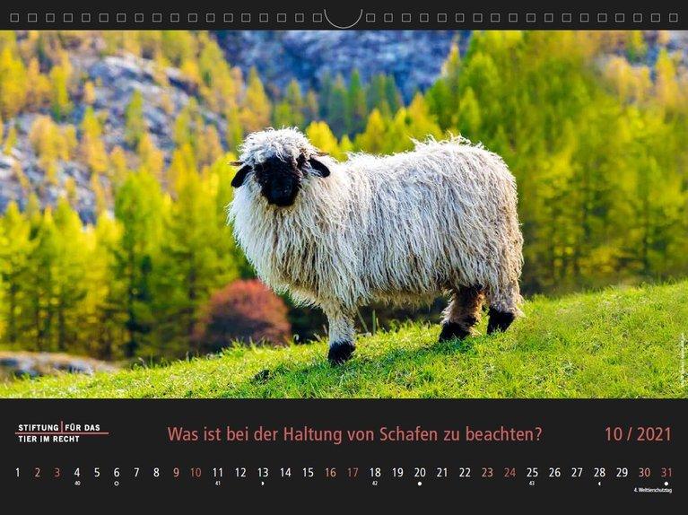 Oktober 2021 Kalenderbild