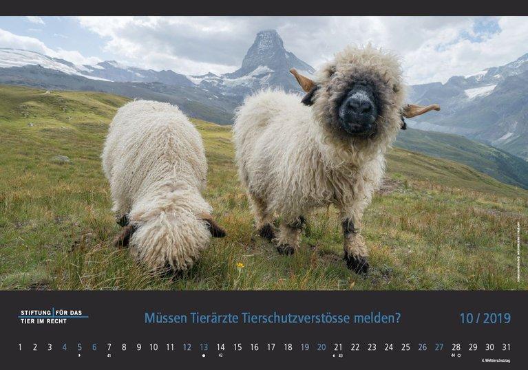 TIR Kalender 2019 Oktober