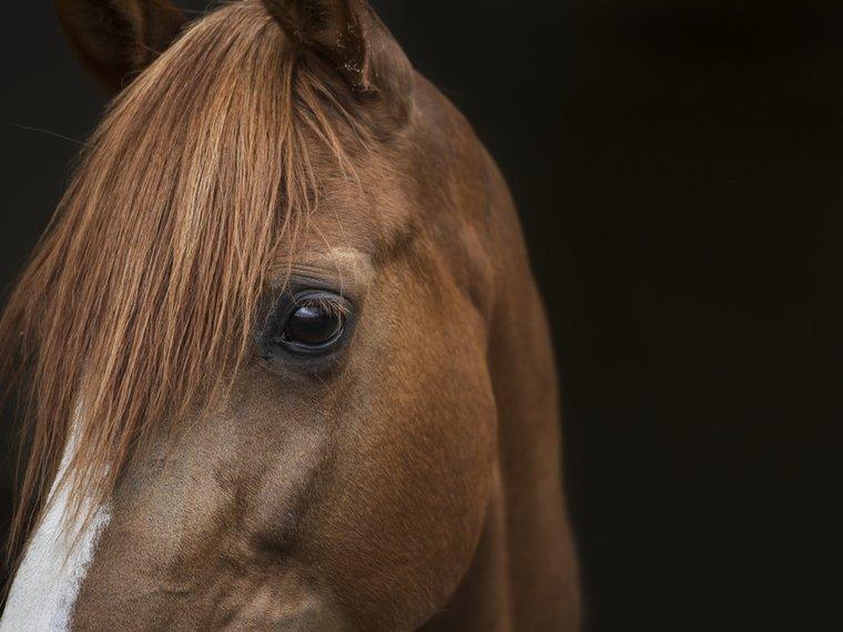 Pferd-Nahaufnahme.jpg