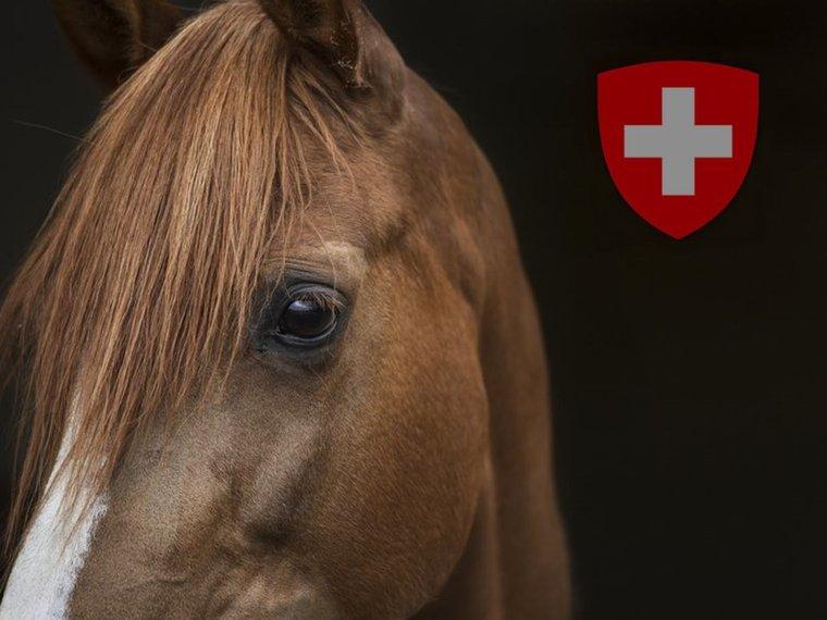 Bild Pferd Schweiz Alain Berset Antwort offener Brief