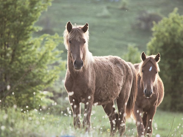 Pferd Wiese