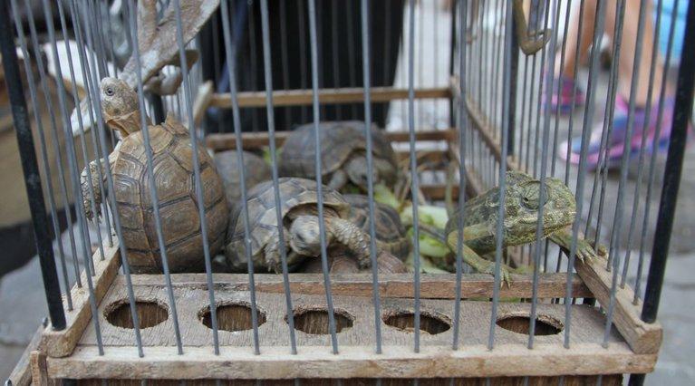 Reptilien in einem Käfig auf einem Markt