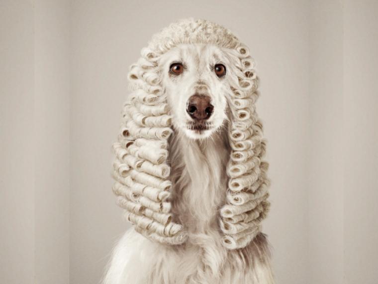 Platzhalter RufLanz Hund quer