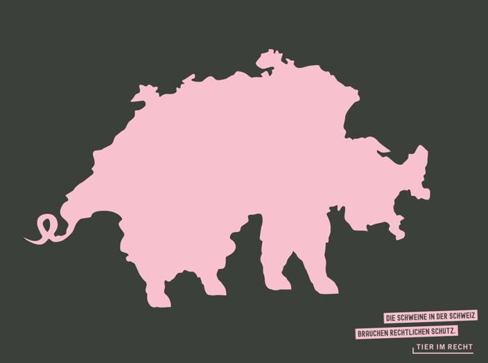 Die Schweine in der Schweiz brauchen rechtlichen Schutz