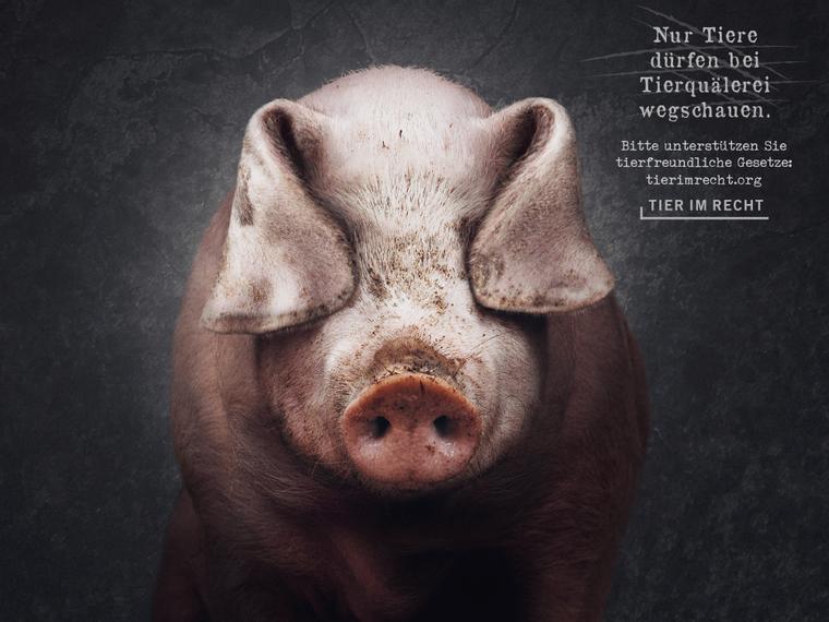 Nur Tiere dürfen bei Tierquälerei wegschauen, Schwein Querformat