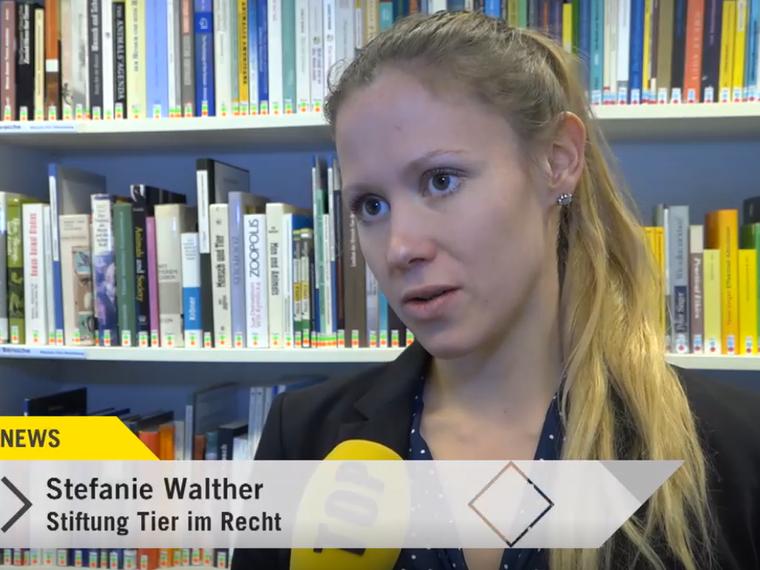 Youtube Tele Top News vom 30.1.2019 mit Stefanie Walther zum Thema Tierquälerei