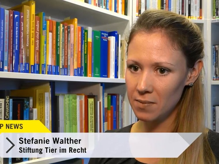 Youtube Top News Tele Top vom 22.11.2018 mit Stefanie Walther zum Thema Auswertung der Schweizer Tierschutzstrafpraxis 2017